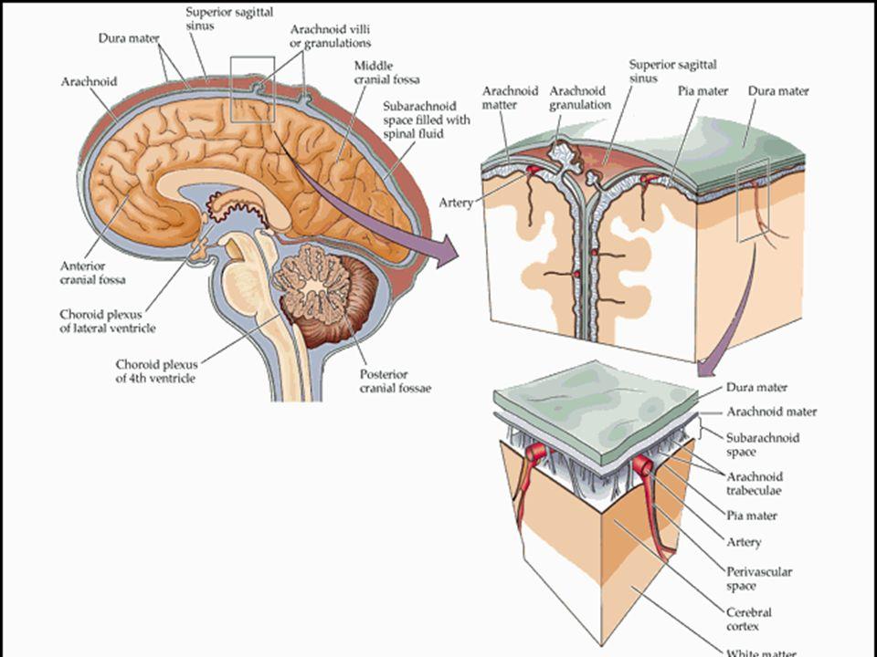 Parasentez sıvıları Karın boşluğuna (periton boşluğu) girerek sıvı alma işlemine parasentez (abdominal parasentez) denir.