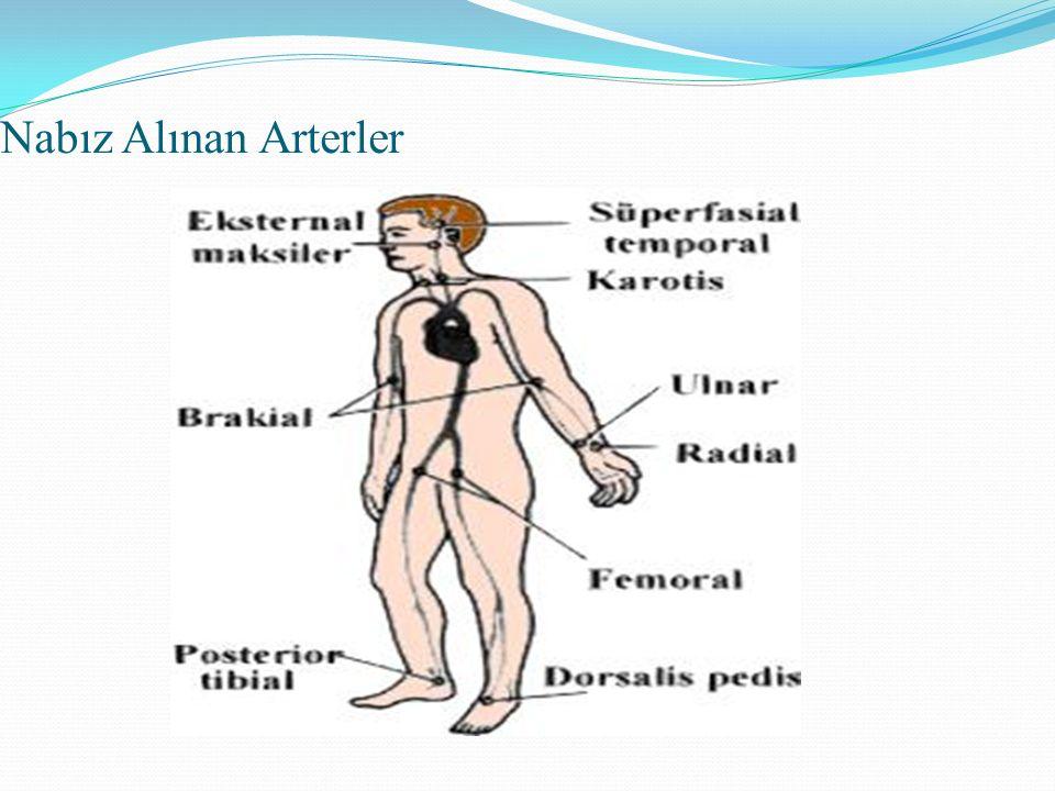 Nabız Alınan Arterler