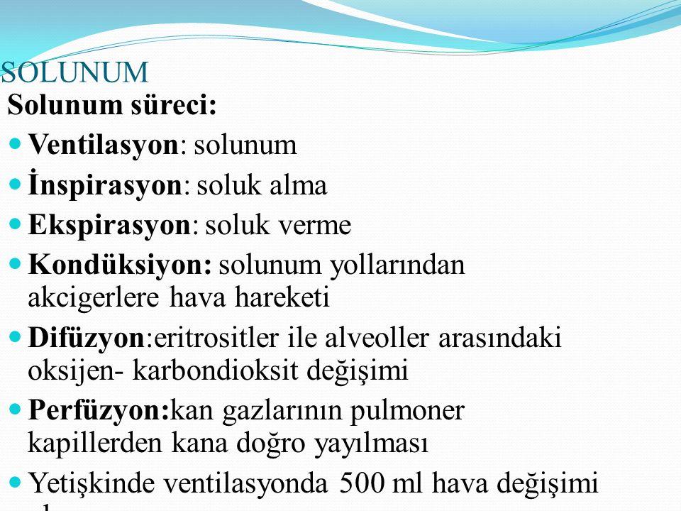 SOLUNUM Solunum süreci: Ventilasyon: solunum İnspirasyon: soluk alma Ekspirasyon: soluk verme Kondüksiyon: solunum yollarından akcigerlere hava hareke