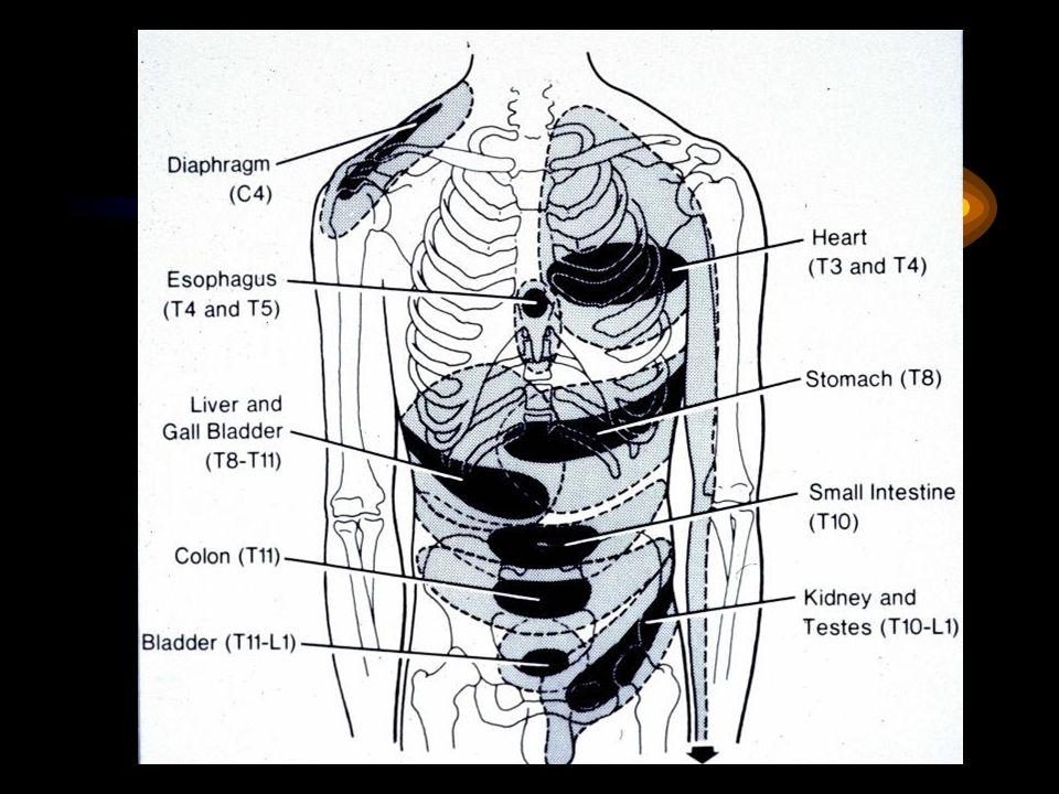 Karın Muayenesinde Patolojik Bulgular-2 Perküsyon: Kc matitesinin yerini timpanikses=ülser perforasyonu, kutanöz hiperestezi, sağ üst kadranda ağrı=kolesisit, distandü karında yaygın timpanizm=sigmoid volvulus,obstrüksiyon….