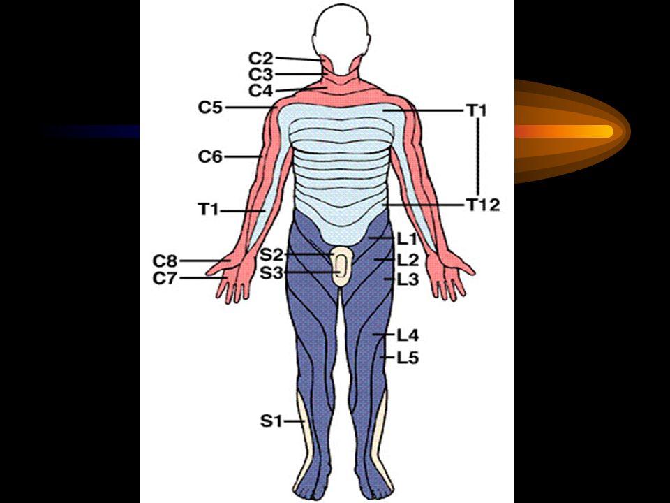Mide/duodenum – Perforasyonu Karın ağrısı Rijidite( tahta karın) Peritoneal irritasyon bulguları şok X-ray de diafragma altında serbest hava