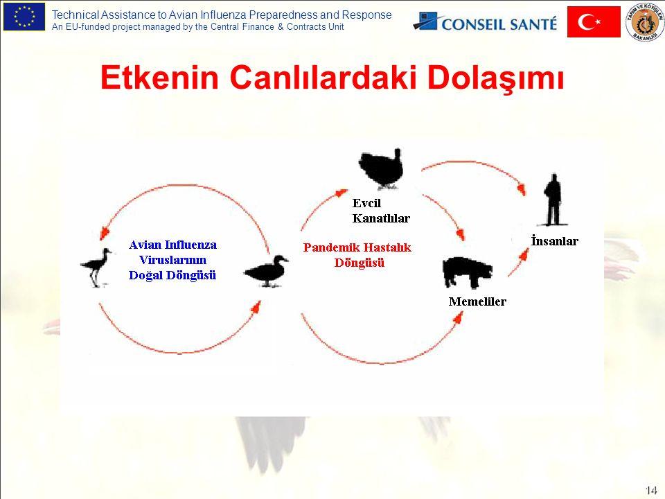 Technical Assistance to Avian Influenza Preparedness and Response An EU-funded project managed by the Central Finance & Contracts Unit 14 Etkenin Canlılardaki Dolaşımı