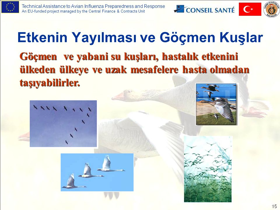 Technical Assistance to Avian Influenza Preparedness and Response An EU-funded project managed by the Central Finance & Contracts Unit 15 Etkenin Yayı