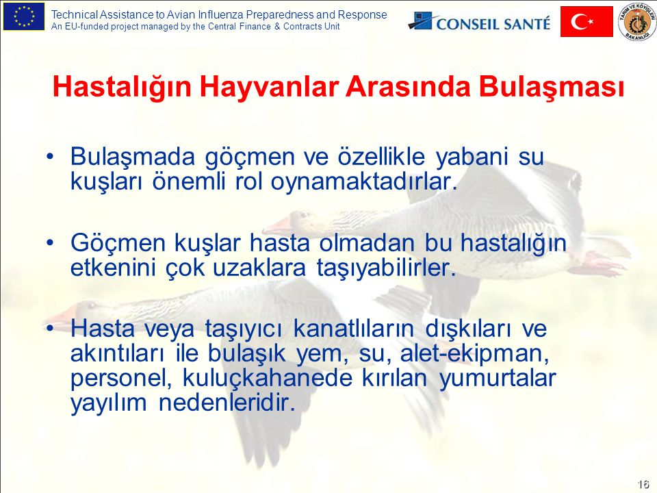 Technical Assistance to Avian Influenza Preparedness and Response An EU-funded project managed by the Central Finance & Contracts Unit 16 Bulaşmada gö