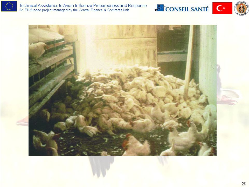 Technical Assistance to Avian Influenza Preparedness and Response An EU-funded project managed by the Central Finance & Contracts Unit 26