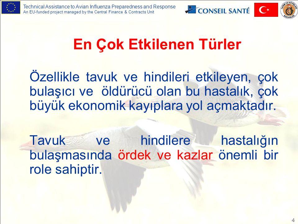 Technical Assistance to Avian Influenza Preparedness and Response An EU-funded project managed by the Central Finance & Contracts Unit 4 Özellikle tavuk ve hindileri etkileyen, çok bulaşıcı ve öldürücü olan bu hastalık, çok büyük ekonomik kayıplara yol açmaktadır.