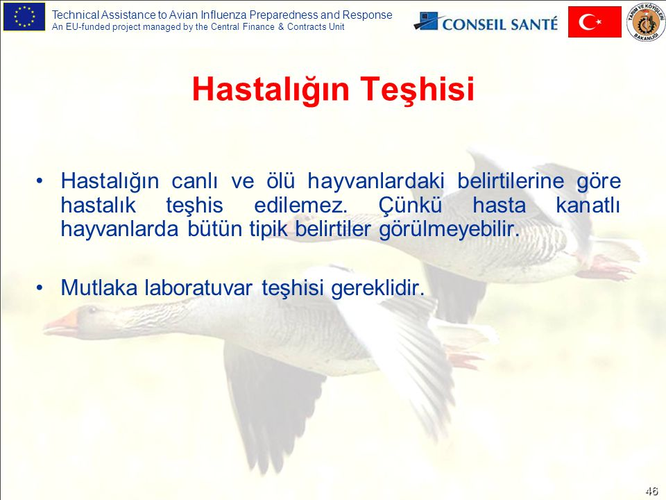 Technical Assistance to Avian Influenza Preparedness and Response An EU-funded project managed by the Central Finance & Contracts Unit 46 Hastalığın T