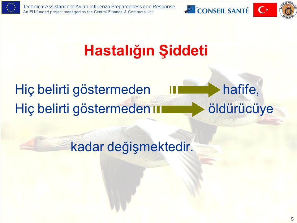 Technical Assistance to Avian Influenza Preparedness and Response An EU-funded project managed by the Central Finance & Contracts Unit 5 Hastalığın Şiddeti Hiç belirti göstermeden hafife, Hiç belirti göstermeden öldürücüye kadar değişmektedir.