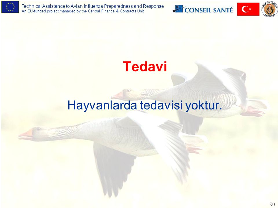 Technical Assistance to Avian Influenza Preparedness and Response An EU-funded project managed by the Central Finance & Contracts Unit 50 Tedavi Hayva