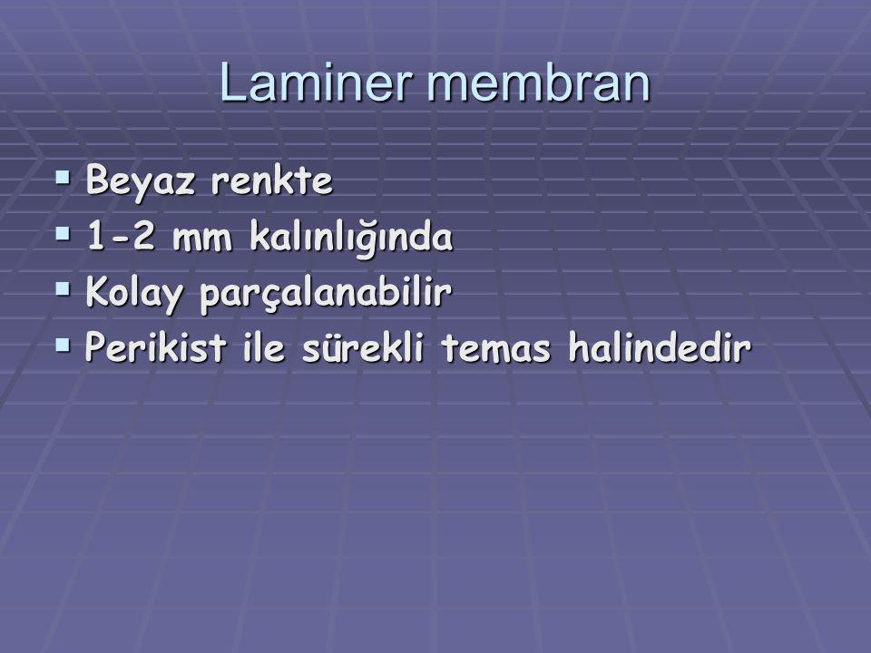 Laminer membran  Beyaz renkte  1-2 mm kalınlığında  Kolay parçalanabilir  Perikist ile sürekli temas halindedir