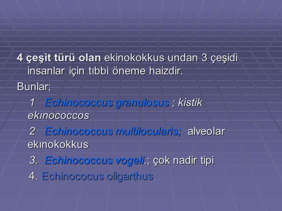 4 çeşit türü olan ekinokokkus undan 3 çeşidi insanlar için tıbbi öneme haizdir.