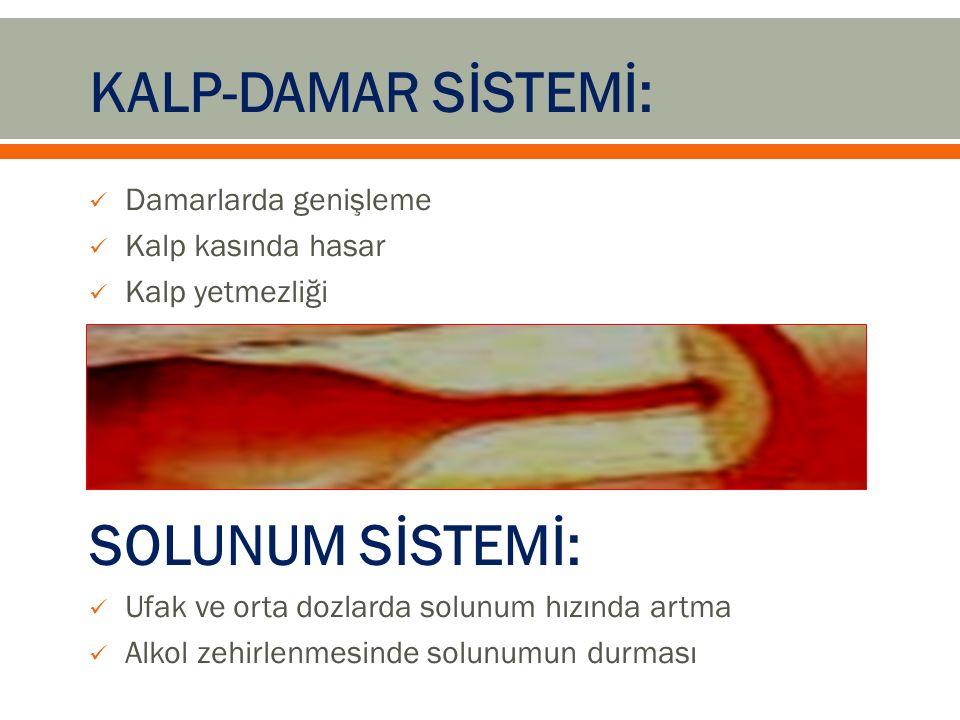 KALP-DAMAR SİSTEMİ: Damarlarda genişleme Kalp kasında hasar Kalp yetmezliği SOLUNUM SİSTEMİ: Ufak ve orta dozlarda solunum hızında artma Alkol zehirlenmesinde solunumun durması