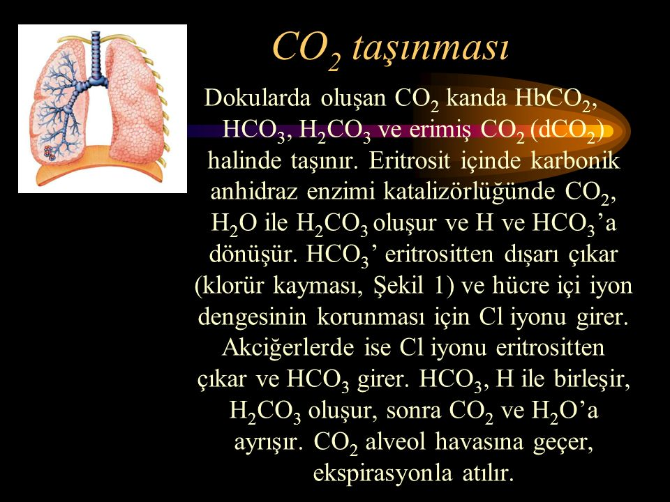 CO 2 taşınması Dokularda oluşan CO 2 kanda HbCO 2, HCO 3, H 2 CO 3 ve erimiş CO 2 (dCO 2 ) halinde taşınır. Eritrosit içinde karbonik anhidraz enzimi
