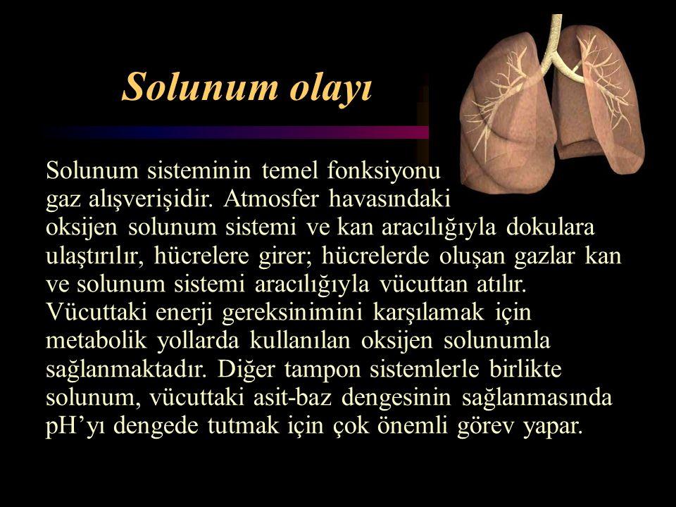 Solunum olayı Solunum sisteminin temel fonksiyonu gaz alışverişidir. Atmosfer havasındaki oksijen solunum sistemi ve kan aracılığıyla dokulara ulaştır