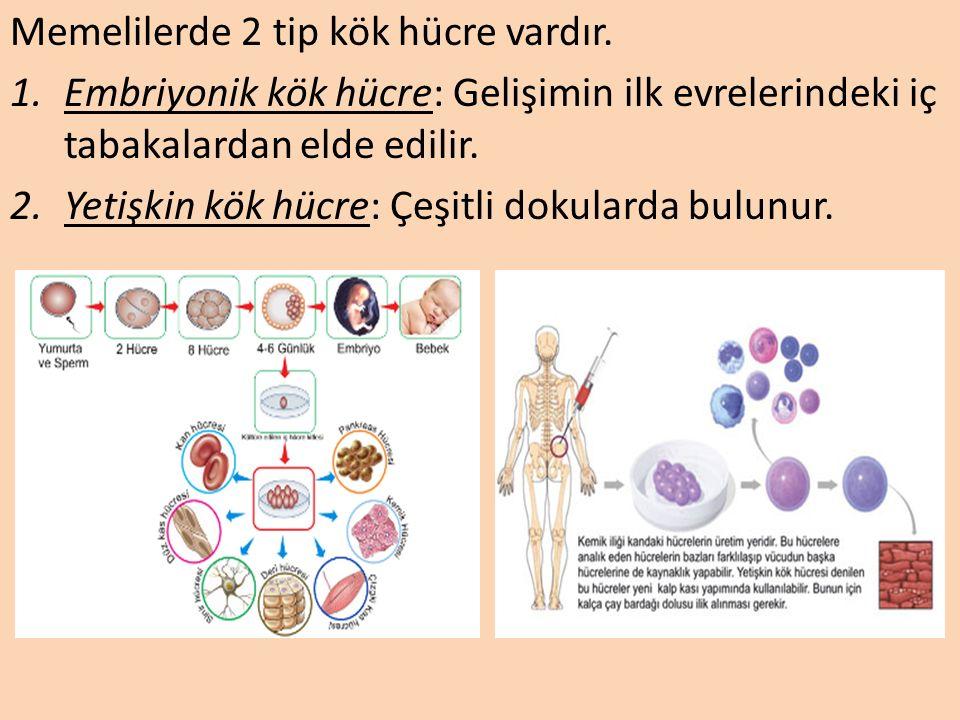 Kök Hücre Tedavisi Kök hücre, mitoz bölünmeyle özelleşmiş hücre tiplerine farklılaşabilen, daha fazla kök hücre üretmek için kendini yenileme yeteneği