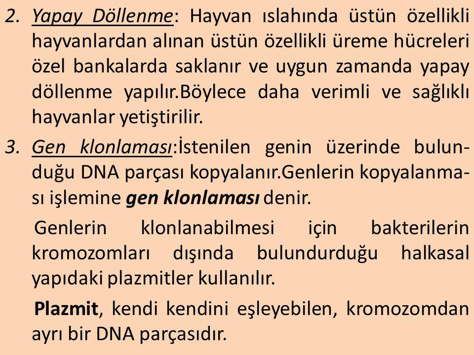 Modern Biyoteknolojik Yöntemler 1.Poliploidi: Hücrelerdeki kromozom sayısının 3n veya daha fazla olması durumudur. En çok bitkiler için uygulanmaktadı