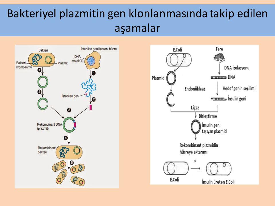 Çok hücreli organizmalardan alınan bir tane vücut hücresinin kullanılmasıyla, birbirinin aynısı olan bireylerin elde edilmesine KLONLAMA, her yeni bir