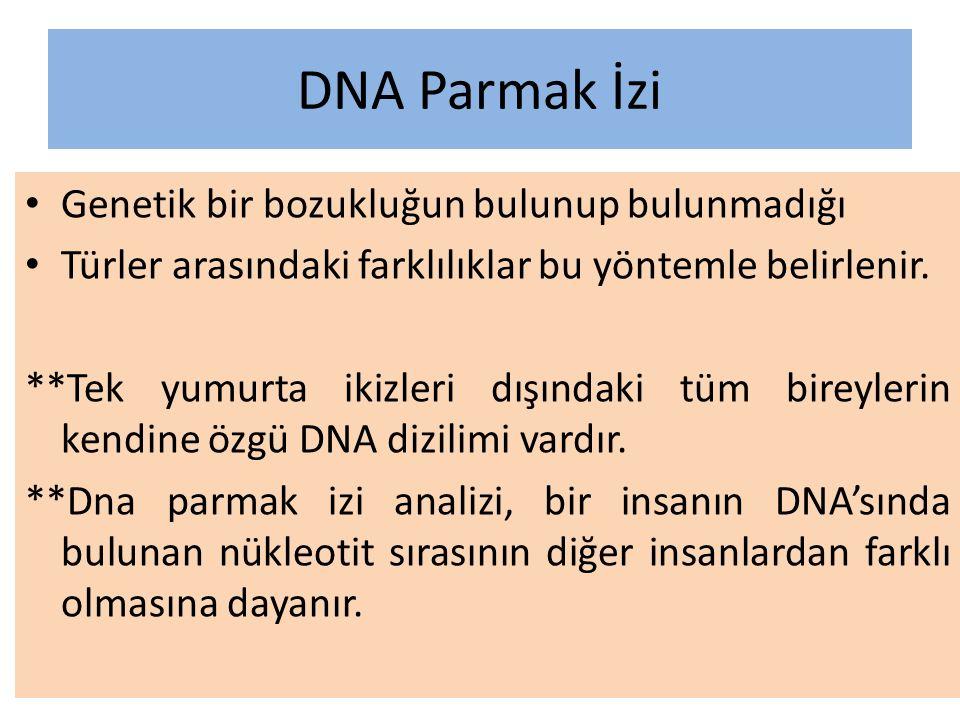 DNA Parmak İzi Genetik bir bozukluğun bulunup bulunmadığı Türler arasındaki farklılıklar bu yöntemle belirlenir.