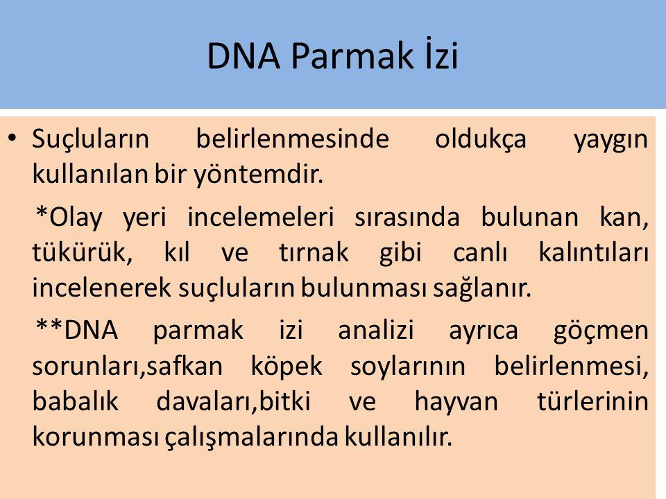 DNA Parmak İzi Genetik bir bozukluğun bulunup bulunmadığı Türler arasındaki farklılıklar bu yöntemle belirlenir. **Tek yumurta ikizleri dışındaki tüm