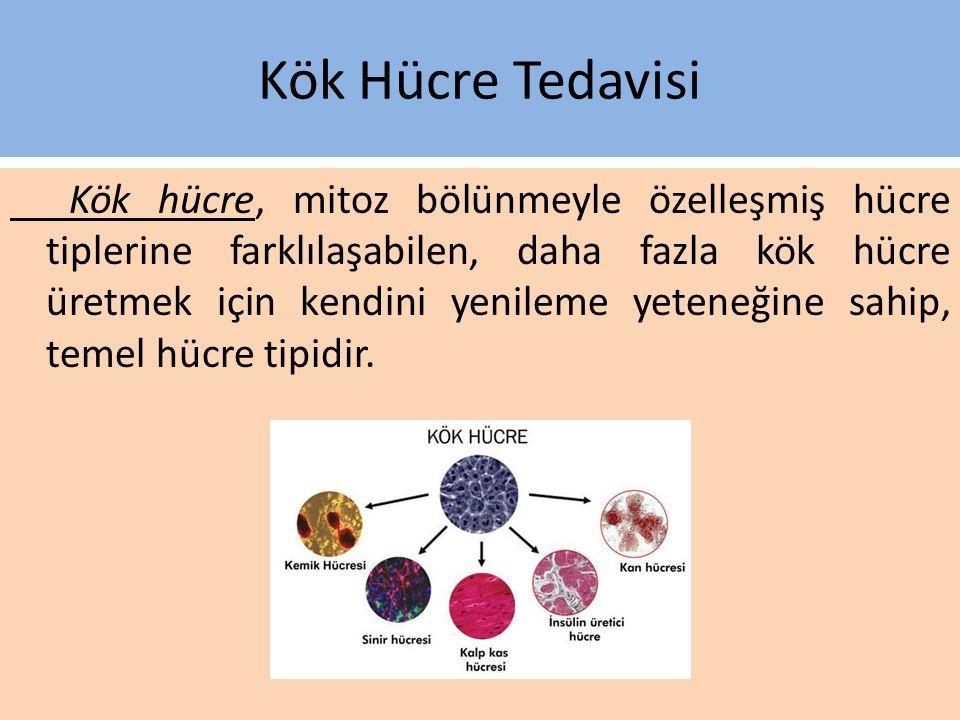 Kök Hücre Tedavisi Kök hücre, mitoz bölünmeyle özelleşmiş hücre tiplerine farklılaşabilen, daha fazla kök hücre üretmek için kendini yenileme yeteneğine sahip, temel hücre tipidir.