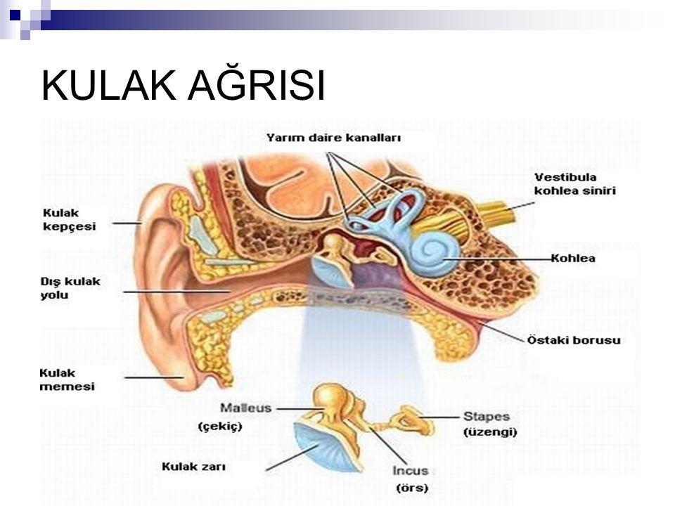 Petrozitis(Gradenigo syd) Temporal kemikteki petroz bölümün enfeksiyonudur.