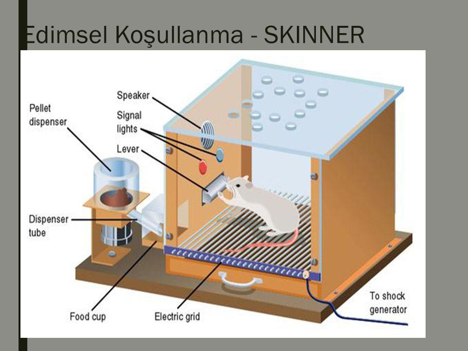 ■Düzenek içinde organizmanın belirli ses ya da ışığın yanıp yanmama durumuna göre manivelaya basması halinde bir parça yiyecekle ödüllendirilmekte ya da elektrik akımına kapılmaktadır.