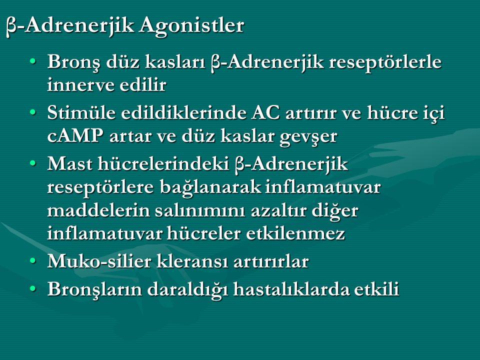 Bronş düz kasları β-Adrenerjik reseptörlerle innerve edilirBronş düz kasları β-Adrenerjik reseptörlerle innerve edilir Stimüle edildiklerinde AC artırır ve hücre içi cAMP artar ve düz kaslar gevşerStimüle edildiklerinde AC artırır ve hücre içi cAMP artar ve düz kaslar gevşer Mast hücrelerindeki β-Adrenerjik reseptörlere bağlanarak inflamatuvar maddelerin salınımını azaltır diğer inflamatuvar hücreler etkilenmezMast hücrelerindeki β-Adrenerjik reseptörlere bağlanarak inflamatuvar maddelerin salınımını azaltır diğer inflamatuvar hücreler etkilenmez Muko-silier kleransı artırırlarMuko-silier kleransı artırırlar Bronşların daraldığı hastalıklarda etkiliBronşların daraldığı hastalıklarda etkili β-Adrenerjik Agonistler