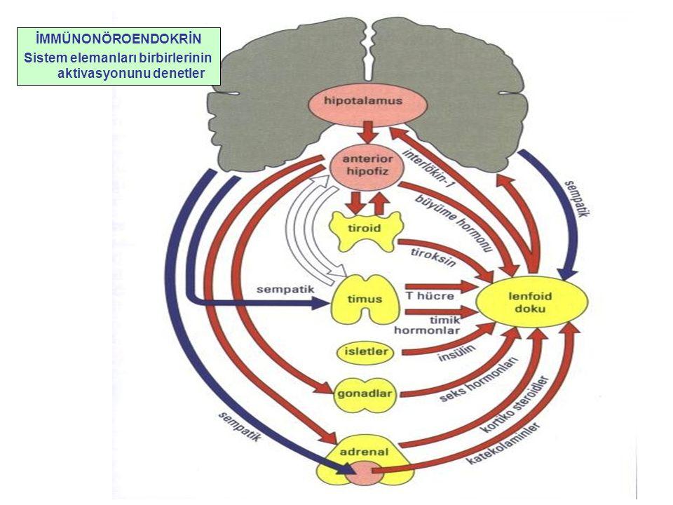 İMMÜNONÖROENDOKRİN Sistem elemanları birbirlerinin aktivasyonunu denetler
