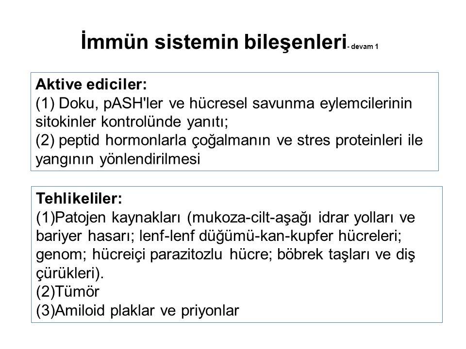 Aktive ediciler: (1) Doku, pASH ler ve hücresel savunma eylemcilerinin sitokinler kontrolünde yanıtı; (2) peptid hormonlarla çoğalmanın ve stres proteinleri ile yangının yönlendirilmesi Tehlikeliler: (1)Patojen kaynakları (mukoza-cilt-aşağı idrar yolları ve bariyer hasarı; lenf-lenf düğümü-kan-kupfer hücreleri; genom; hücreiçi parazitozlu hücre; böbrek taşları ve diş çürükleri).