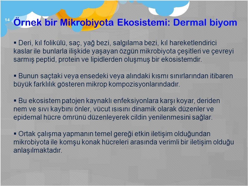 14 Örnek bir Mikrobiyota Ekosistemi: Dermal biyom  Deri, kıl folikülü, saç, yağ bezi, salgılama bezi, kıl hareketlendirici kaslar ile bunlarla ilişki