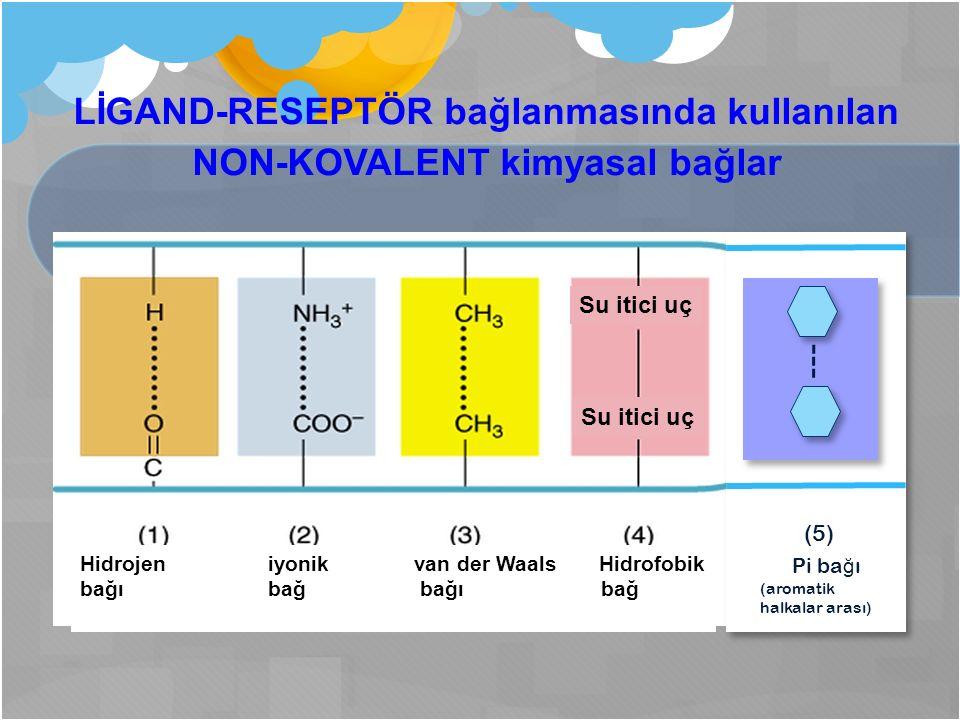 LİGAND-RESEPTÖR bağlanmasında kullanılan NON-KOVALENT kimyasal bağlar Hidrojen iyonik van der Waals Hidrofobik bağı bağ Su itici uç (5) Pi ba ğ ı (aromatik halkalar arası)