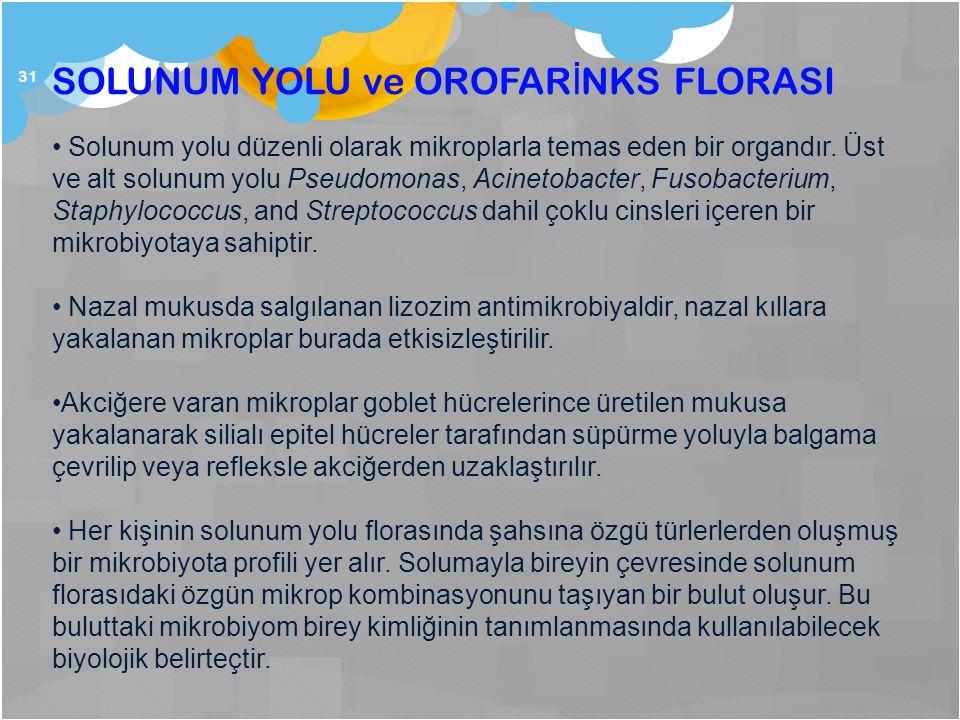 31 SOLUNUM YOLU ve OROFAR İ NKS FLORASI Solunum yolu düzenli olarak mikroplarla temas eden bir organdır. Üst ve alt solunum yolu Pseudomonas, Acinetob