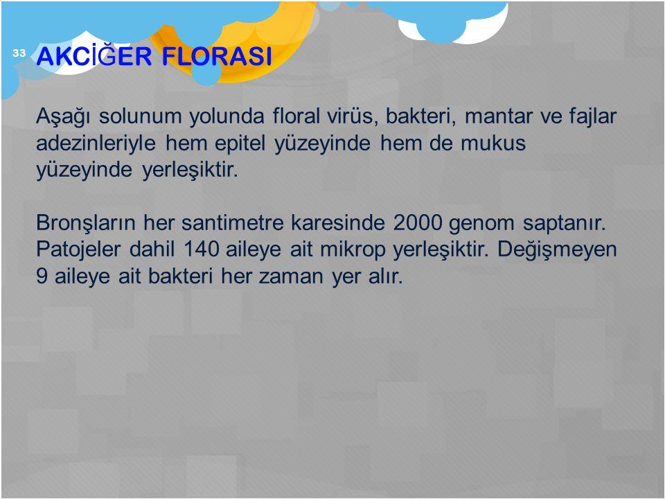 33 AKC İĞ ER FLORASI Aşağı solunum yolunda floral virüs, bakteri, mantar ve fajlar adezinleriyle hem epitel yüzeyinde hem de mukus yüzeyinde yerleşikt
