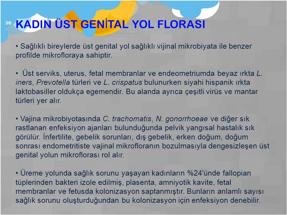 36 KADIN ÜST GEN İ TAL YOL FLORASI Sağlıklı bireylerde üst genital yol sağlıklı vijinal mikrobiyata ile benzer profilde mikrofloraya sahiptir. Üst ser