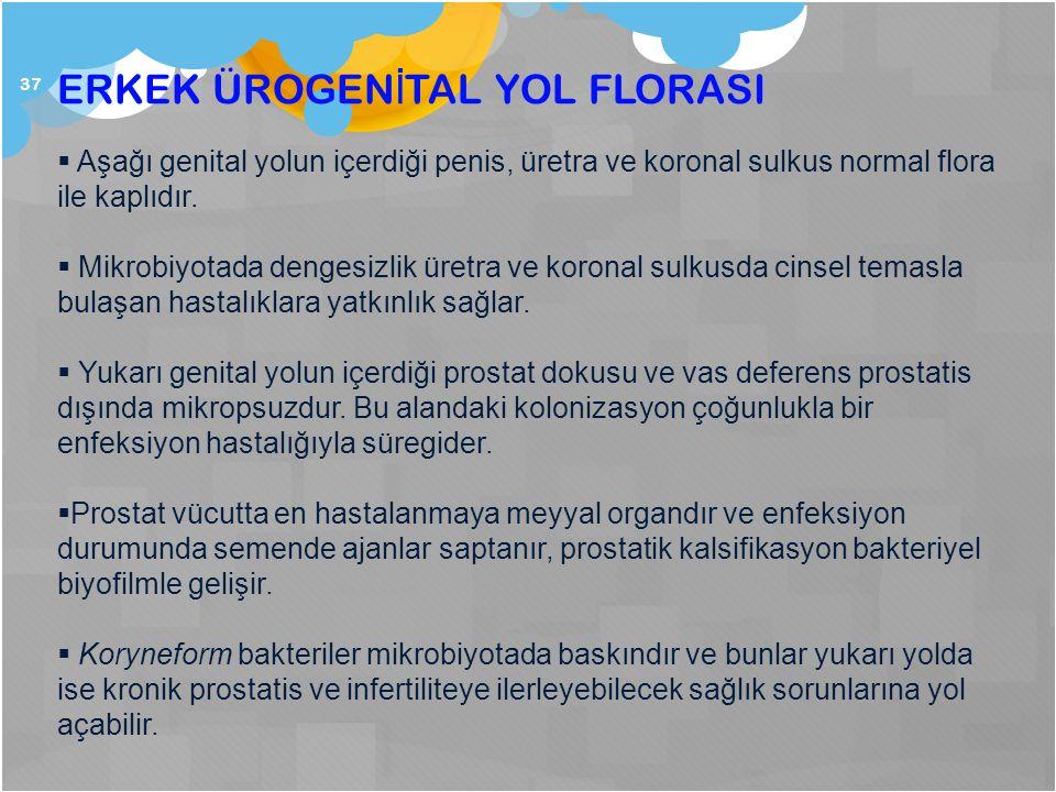 37 ERKEK ÜROGEN İ TAL YOL FLORASI  Aşağı genital yolun içerdiği penis, üretra ve koronal sulkus normal flora ile kaplıdır.  Mikrobiyotada dengesizli