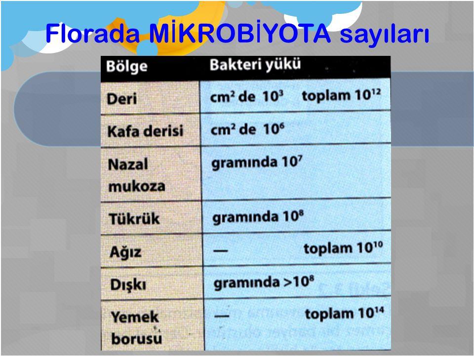 Florada M İ KROB İ YOTA sayıları