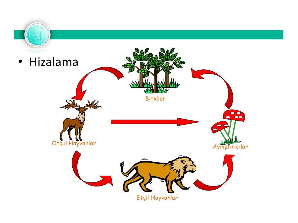 Hizalama Bitkiler Otçul Hayvanlar Etçil Hayvanlar Ayrıştırıcılar