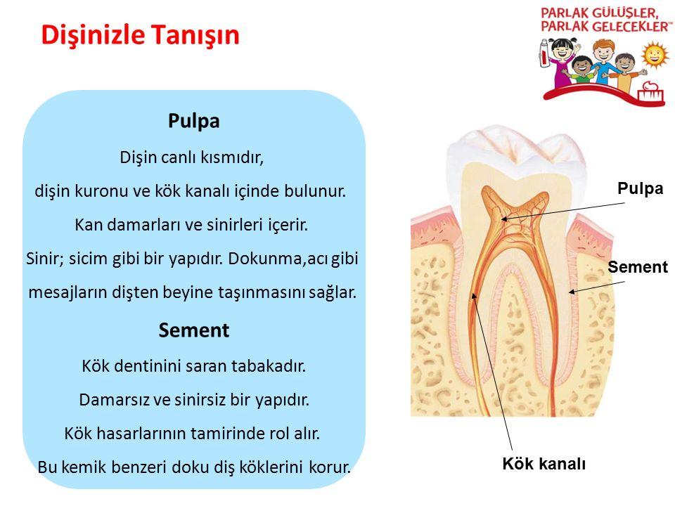 Dişinizle Tanışın Parlak Gülüşler Parlak Gelecekeler Pulpa Sement Kök kanalı Pulpa Dişin canlı kısmıdır, dişin kuronu ve kök kanalı içinde bulunur. Ka