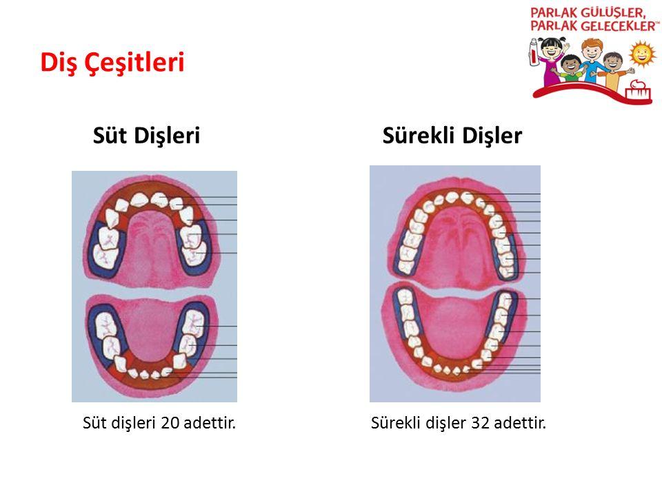 Diş Çeşitleri Süt Dişleri Sürekli Dişler Parlak Gülüşler Parlak Gelecekeler Süt dişleri 20 adettir. Sürekli dişler 32 adettir.