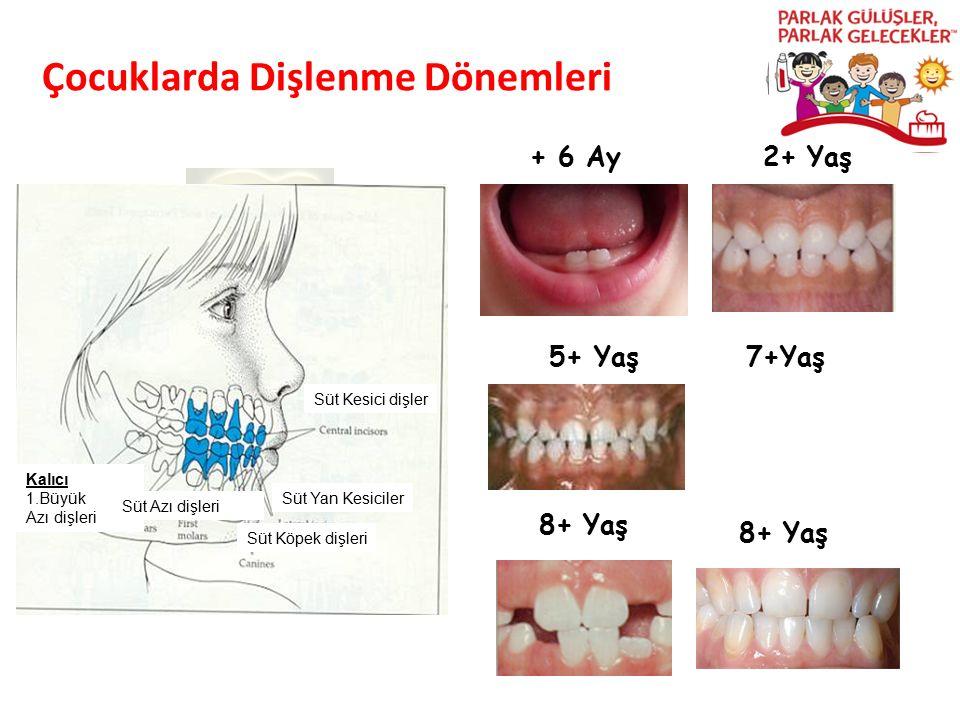 Çocuklarda Dişlenme Dönemleri Parlak Gülüşler Parlak Gelecekeler + 6 Ay2+ Yaş 7+Yaş 8+ Yaş Süt Kesici dişler Süt Köpek dişleri Kalıcı 1.Büyük Azı dişl