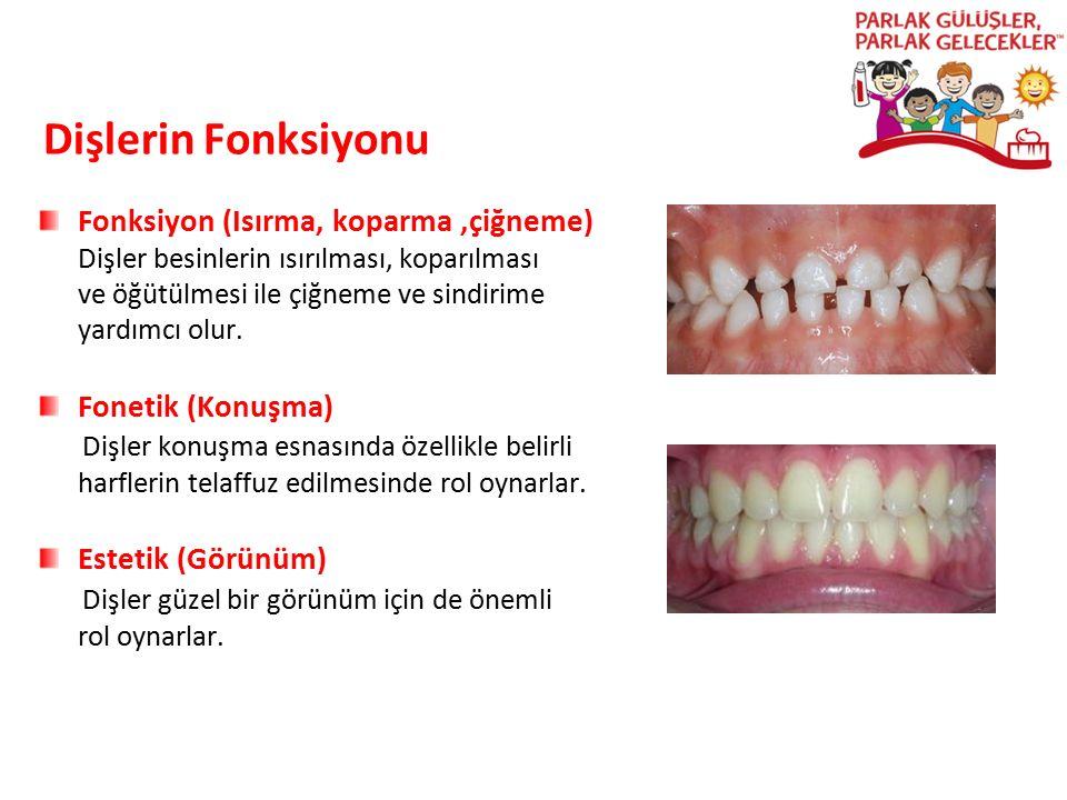 Dişlerin Fonksiyonu Fonksiyon (Isırma, koparma,çiğneme) Dişler besinlerin ısırılması, koparılması ve öğütülmesi ile çiğneme ve sindirime yardımcı olur