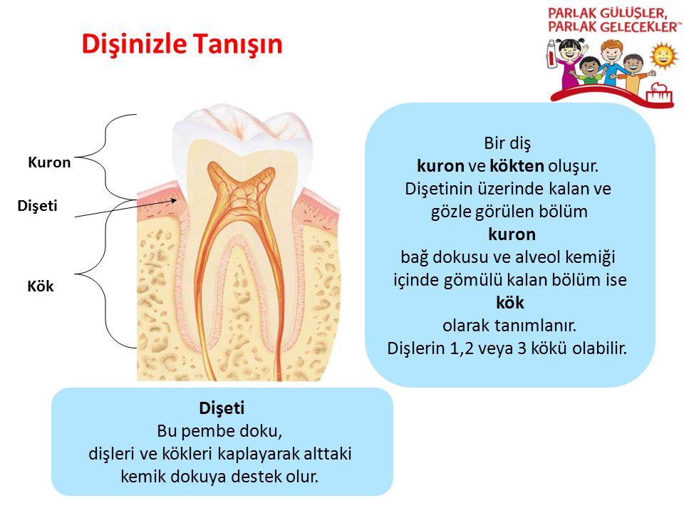 Dişinizle Tanışın Parlak Gülüşler Parlak Gelecekeler Kuron Kök Bir diş kuron ve kökten oluşur. Dişetinin üzerinde kalan ve gözle görülen bölüm kuron b