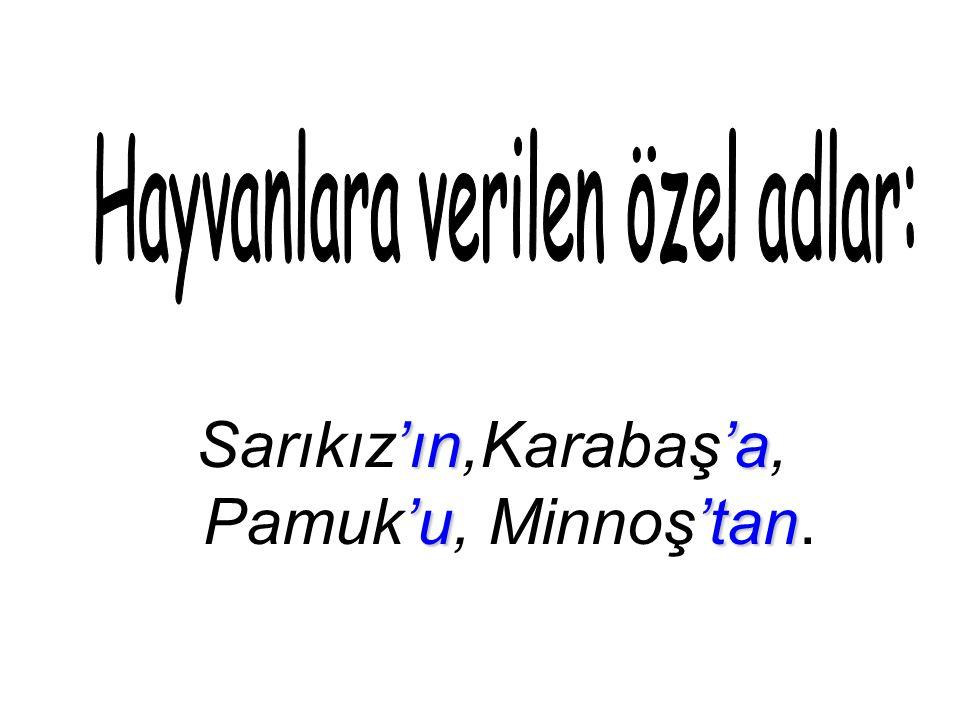 'ın'a 'u'tan Sarıkız'ın,Karabaş'a, Pamuk'u, Minnoş'tan.