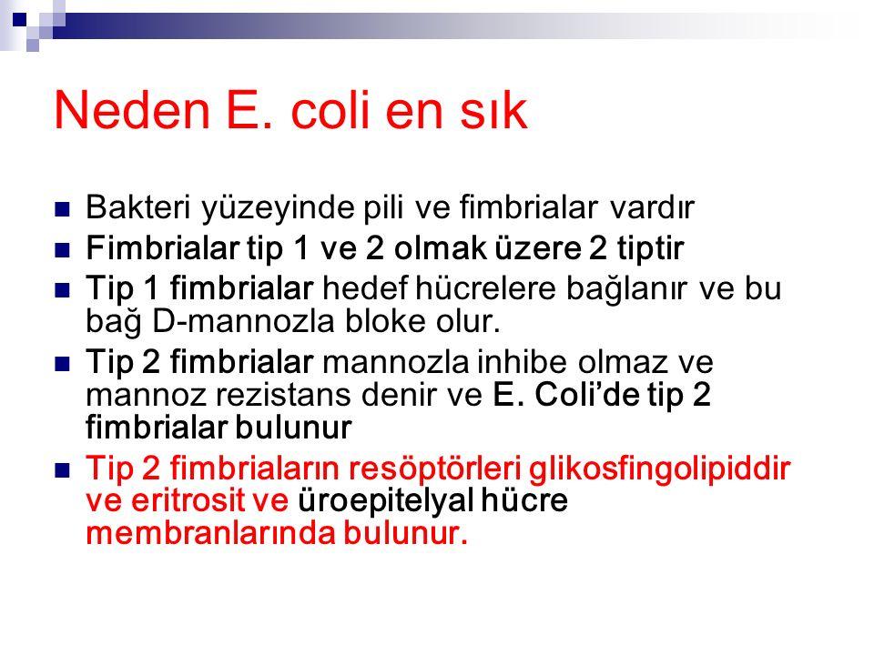 Neden E. coli en sık Bakteri yüzeyinde pili ve fimbrialar vardır Fimbrialar tip 1 ve 2 olmak üzere 2 tiptir Tip 1 fimbrialar hedef hücrelere bağlanır