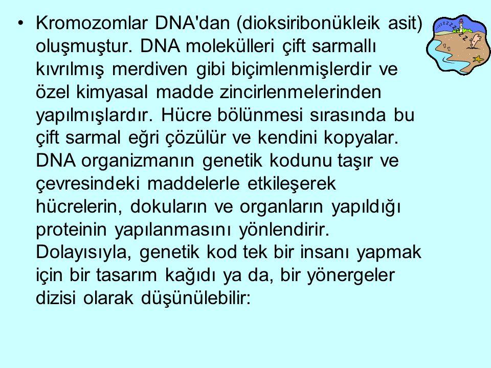 Kromozomlar DNA dan (dioksiribonükleik asit) oluşmuştur.