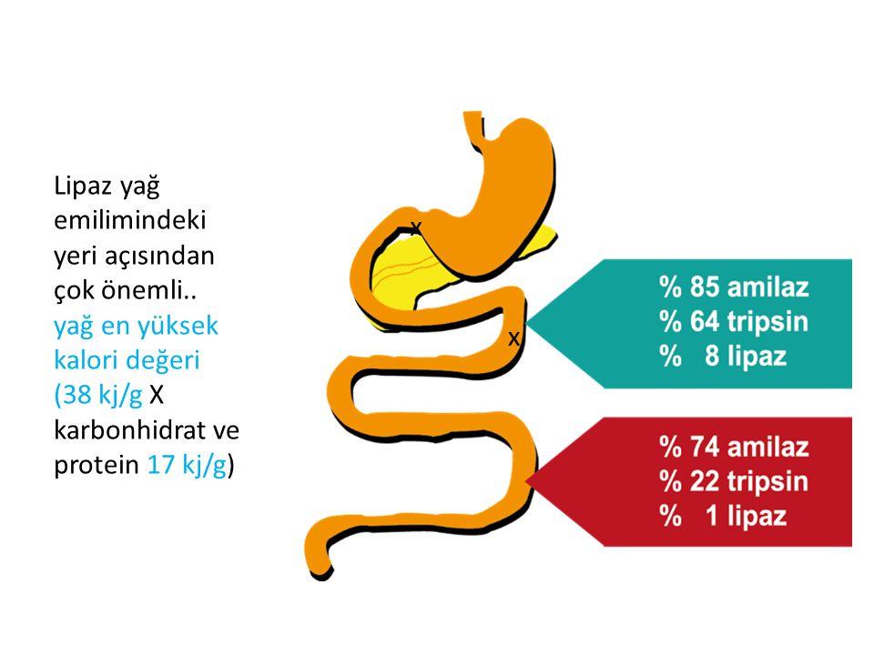 Lipaz yağ emilimindeki yeri açısından çok önemli.. yağ en yüksek kalori değeri (38 kj/g X karbonhidrat ve protein 17 kj/g) x x