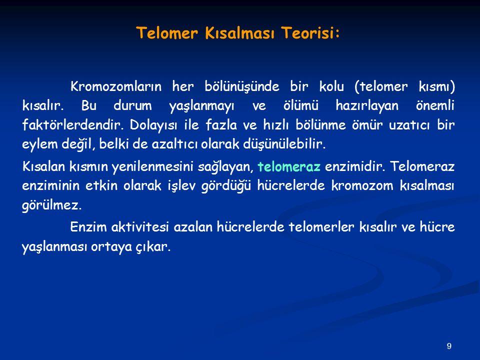 9 Telomer Kısalması Teorisi: Kromozomların her bölünüşünde bir kolu (telomer kısmı) kısalır. Bu durum yaşlanmayı ve ölümü hazırlayan önemli faktörlerd