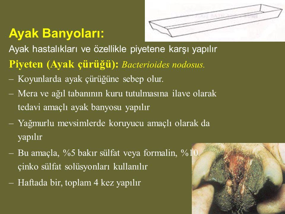 Ayak Banyoları: Ayak hastalıkları ve özellikle piyetene karşı yapılır Piyeten (Ayak çürüğü): Bacterioides nodosus.