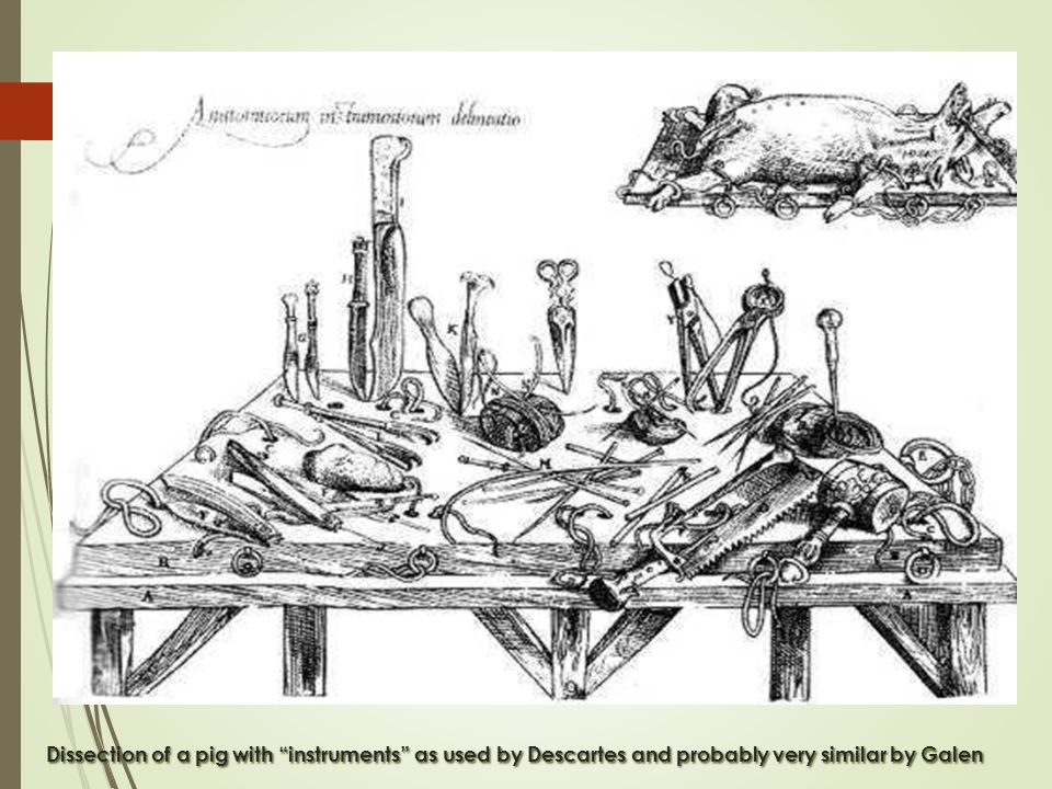 "Dissection of a pig with ""instruments"" as used by Descartes and probably very similar by Galen"
