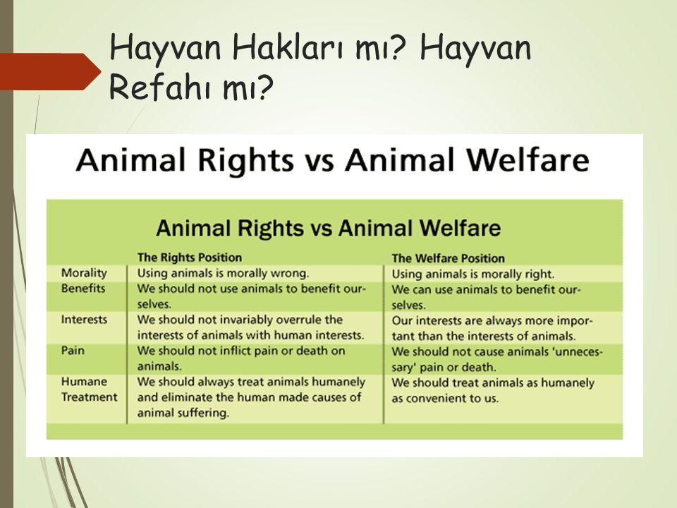 Hayvan Hakları mı? Hayvan Refahı mı?
